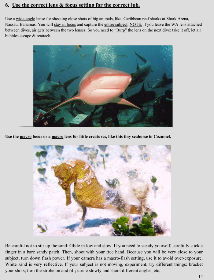 Basic Underwater Photography
